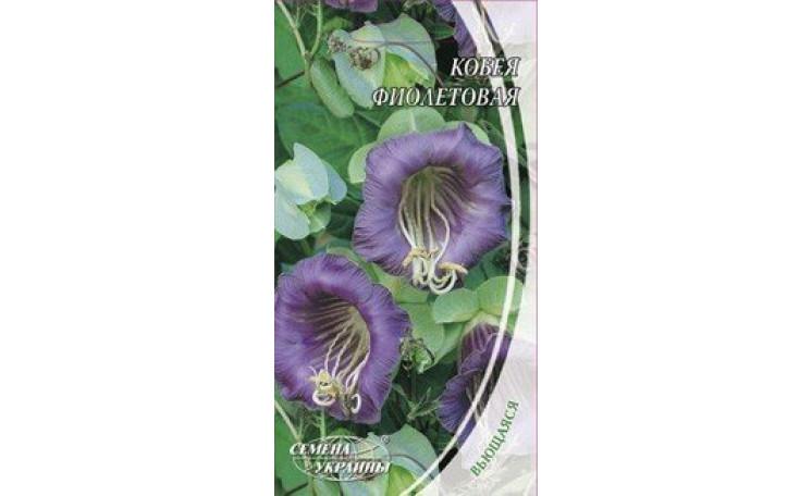 Кобея фиолетовая Семена Украины