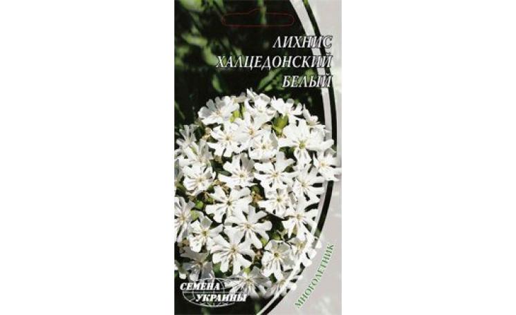 Лихнис халцедонский белый Семена Украины