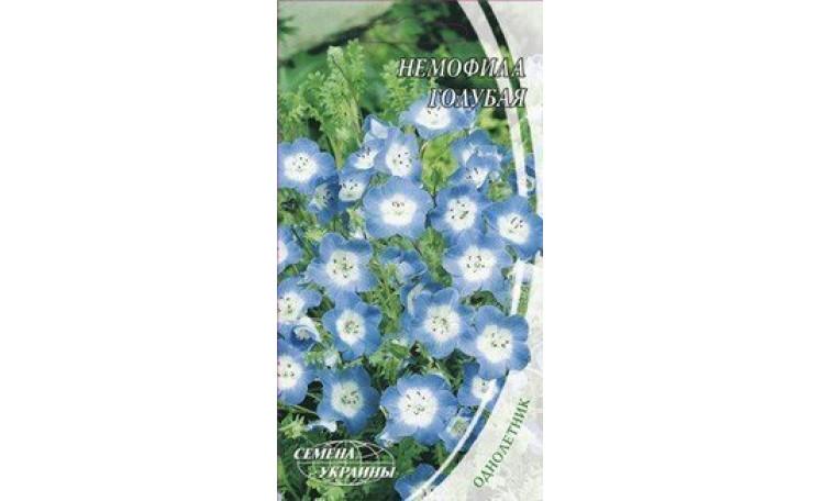 Немофила голубая Семена Украины