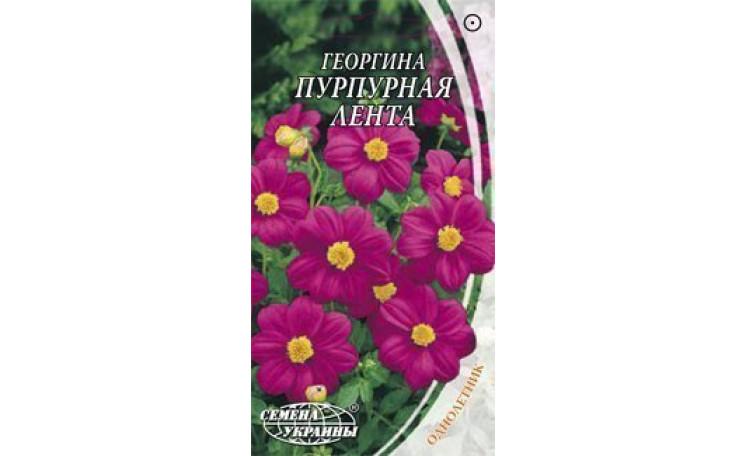 Георгина Пурпурная лента Семена Украины