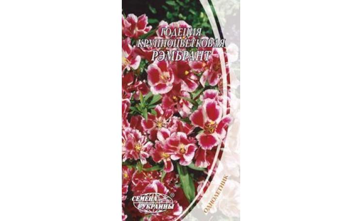 Годеция крупноцветковая Рэмбрант Семена Украины