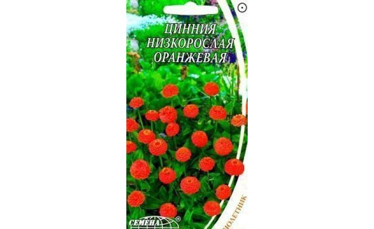 Цинния низкорослая оранжевая Семена Украины