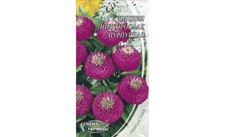 Цинния низкорослая пурпурная Семена Украины