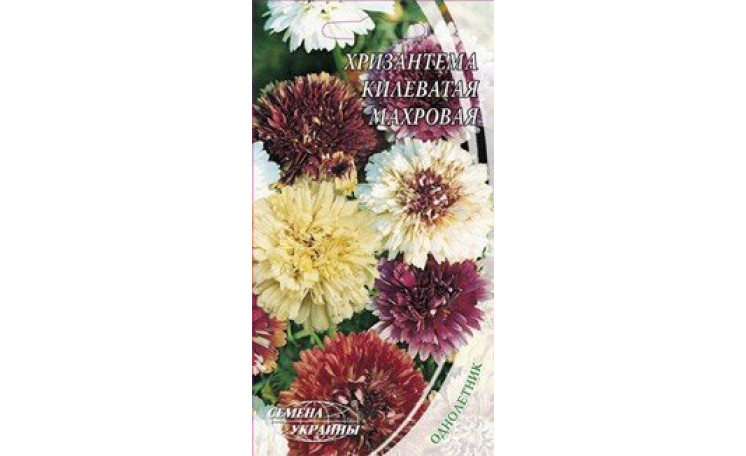 Хризантема килеватая махровая Семена Украины