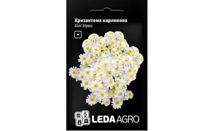 Хризантема карликовая Белая звезда Leda Agro