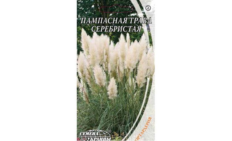 Пампасная трава серебристая Семена Украины