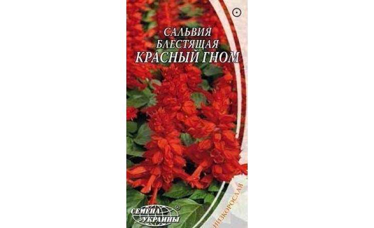 Сальвия блестящая красная Семена Украины