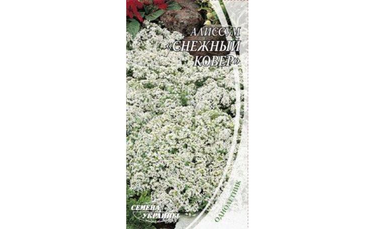Алиссум Снежный ковер Семена Украины