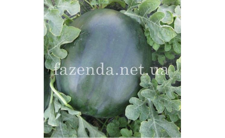 CRX 10041 F1 Арбуз Cora Seeds (Италия)