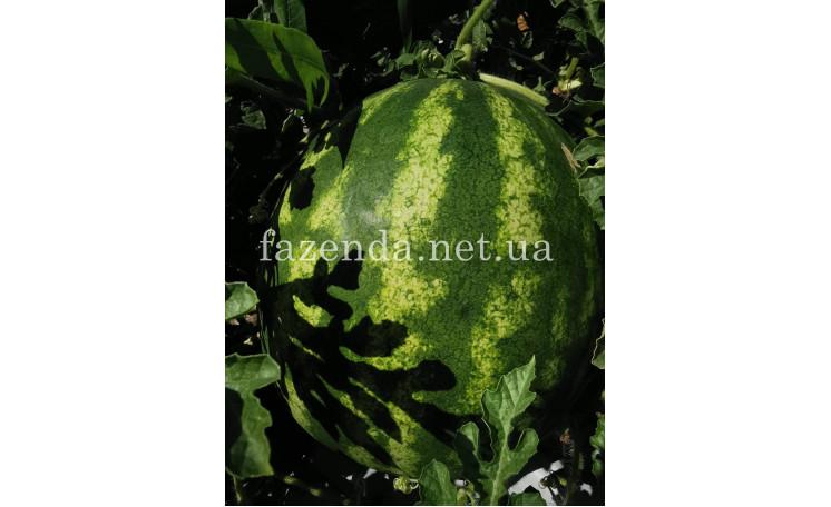 """Арбуз """"ИНХ 1805 F1"""" (Innova Seeds)"""