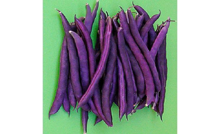 Пурпурная королева Purpurnaya koroleva Фасоль