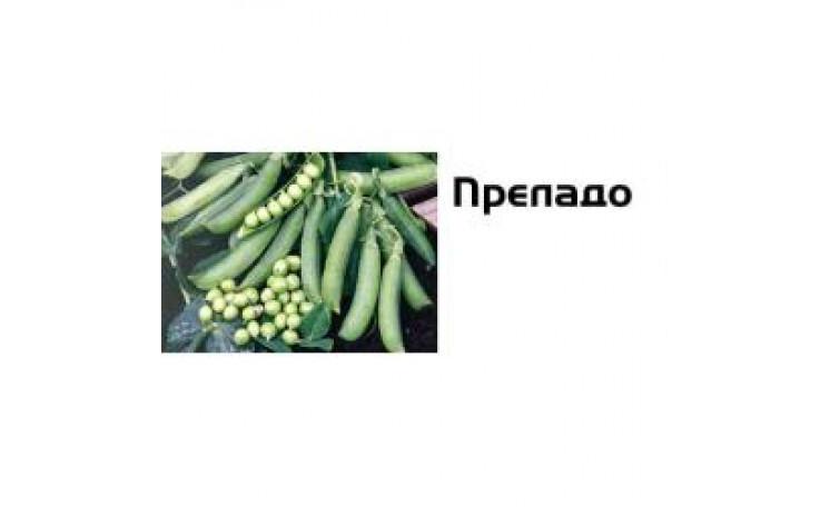 """Горох """"Преладо"""" (Syngenta)"""