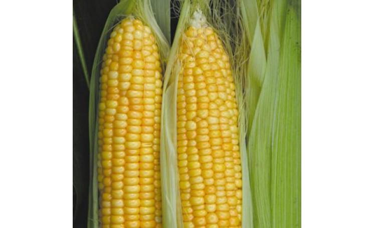 Кукуруза Нектар-1 F1 Элитный ряд