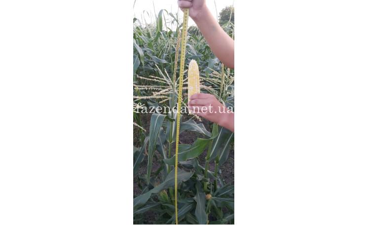 Кукуруза Нирвана F1 (Pop Vrieng Seeds)