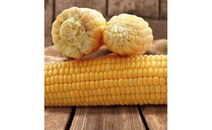 Кукуруза Танем (May Seed)