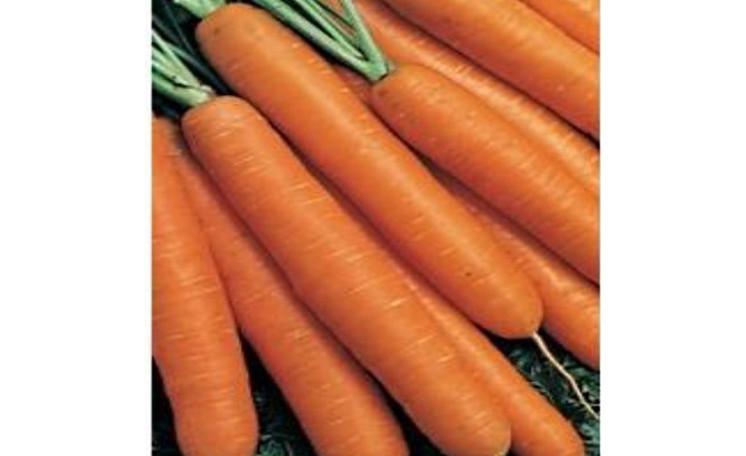 Морковь Коралл Элитный ряд