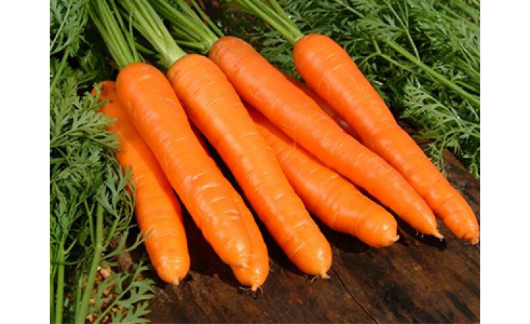 Морковь Кардила