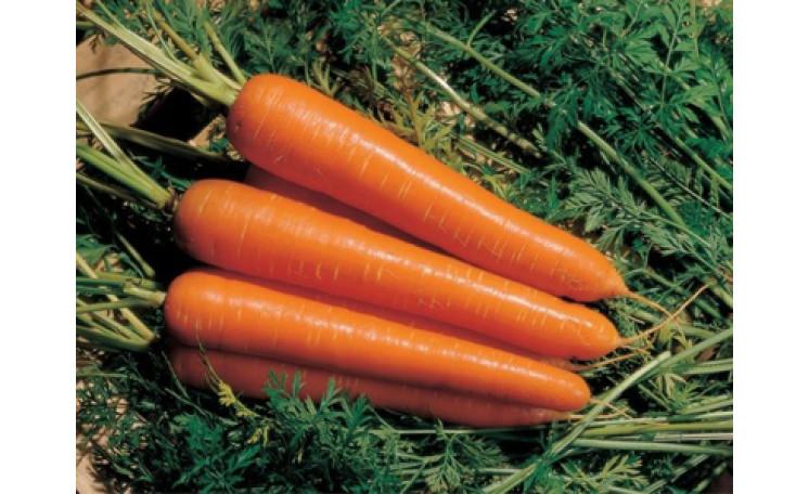 Морковь Tип Топ