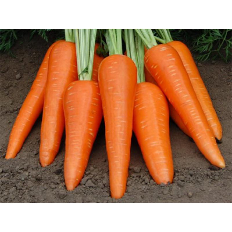 Морковь Абликсо F1