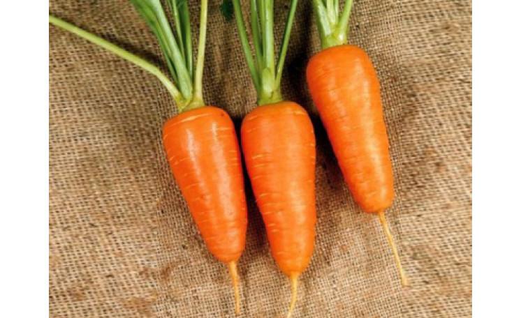 Болтекс Boltex Морковь