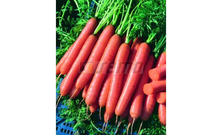 Морковь Йолана F1