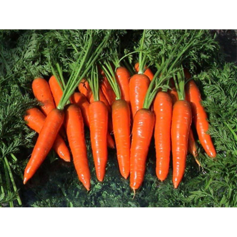 Морковь Каротина