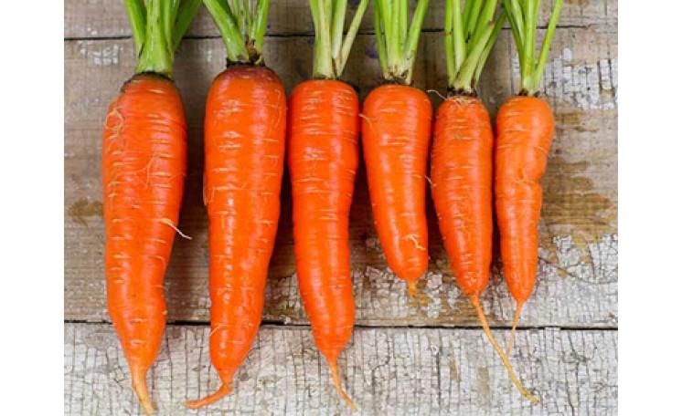 Морковь 1932 F1