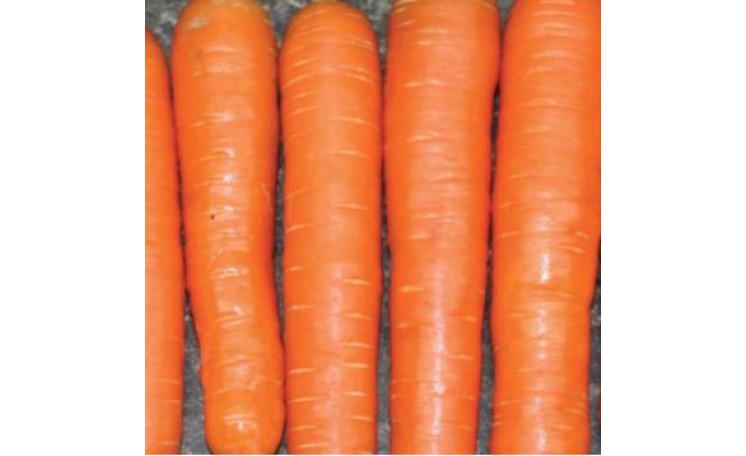 Морковь Нантес Стронг Топ