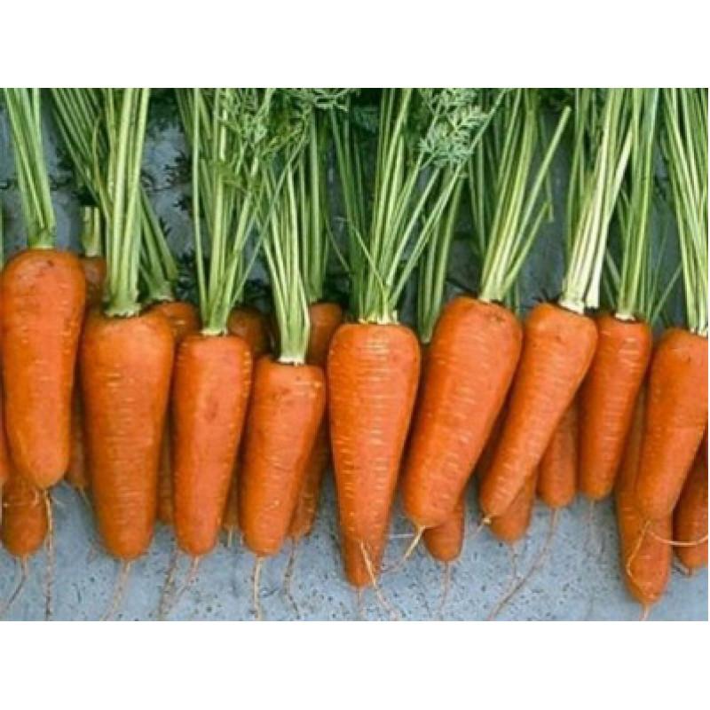 Морковь Ред Коред