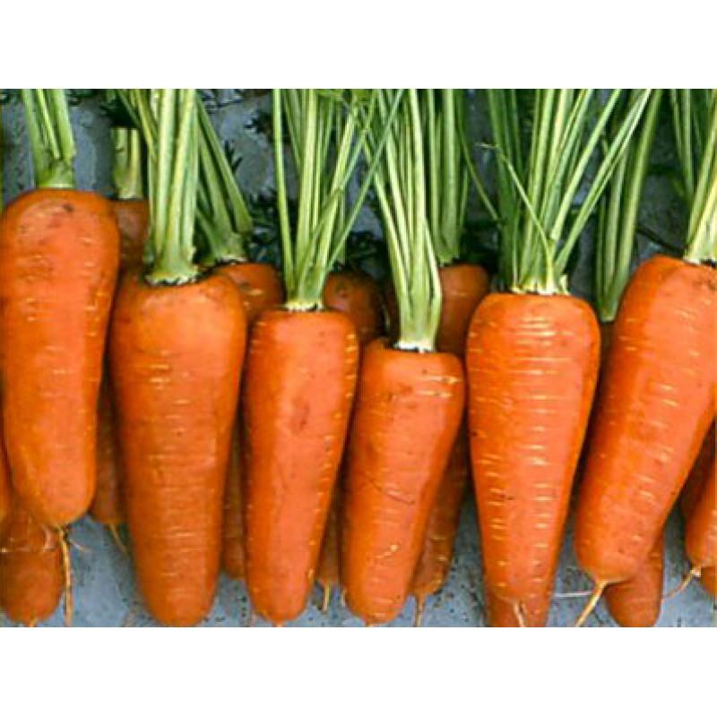 Морковь Шантане Три-Комет