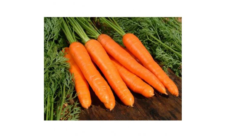 Морковь Скарлет F1