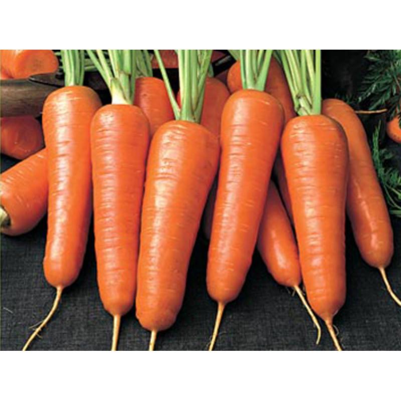 Морковь Смирна