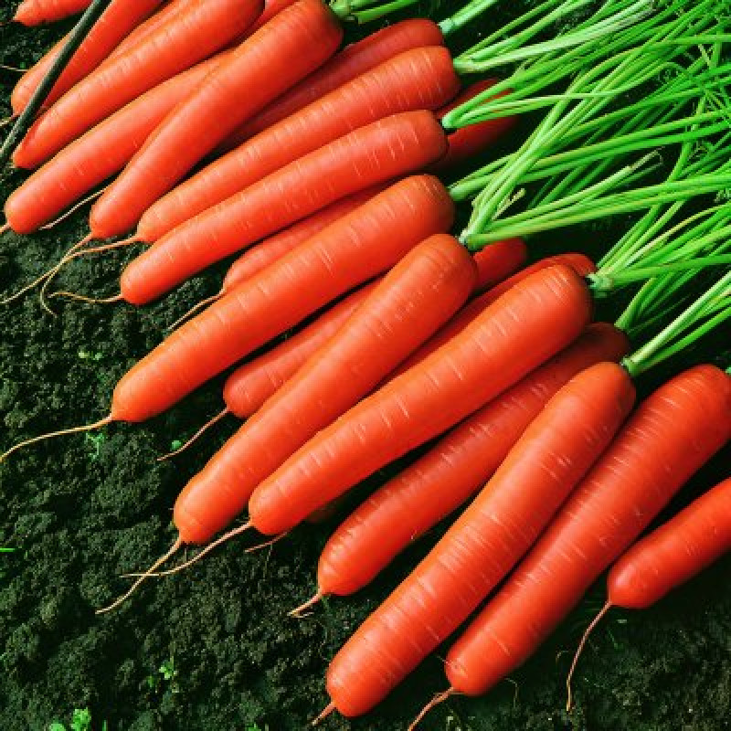 Морковь Темпо F1
