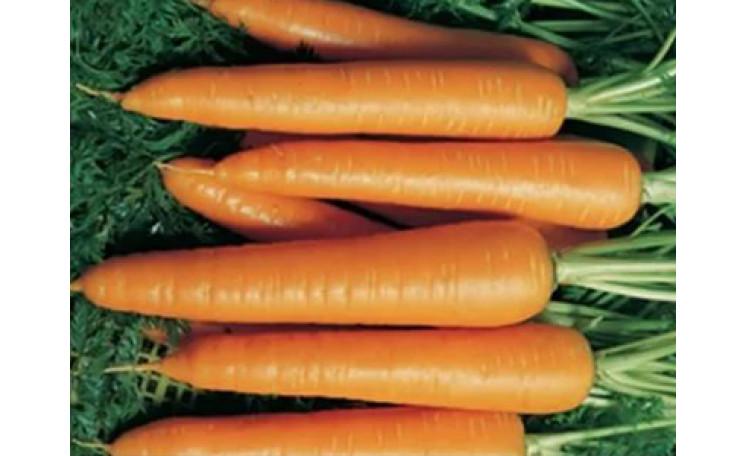 Морковь Ванда