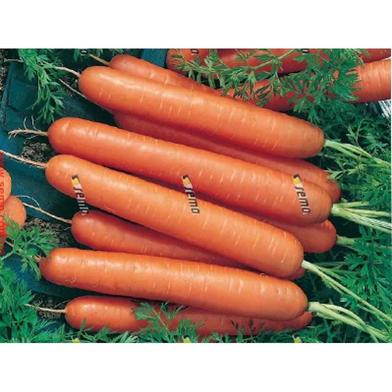 Морковь Ярана F1