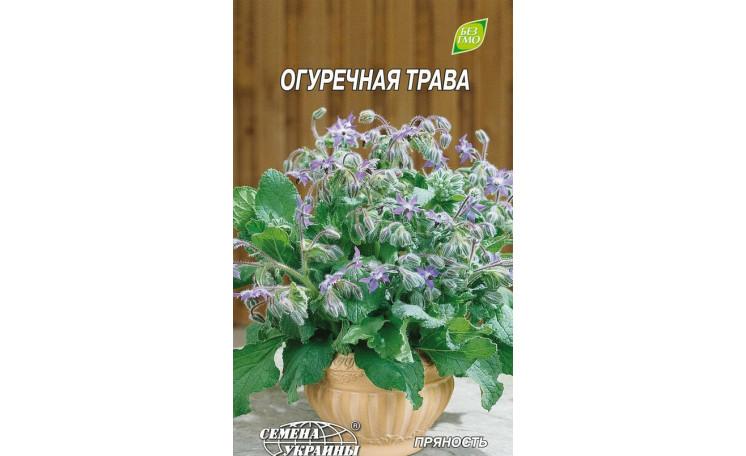 Огуречная трава Семена Украины