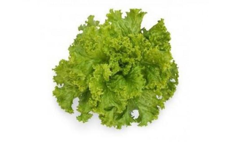 Салат KС 129 (Kitano Seeds)