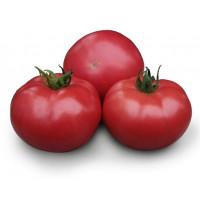Семена индетерминантных томатов