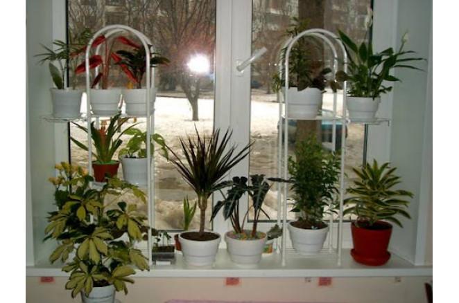 Кімнатні квіти з насіння