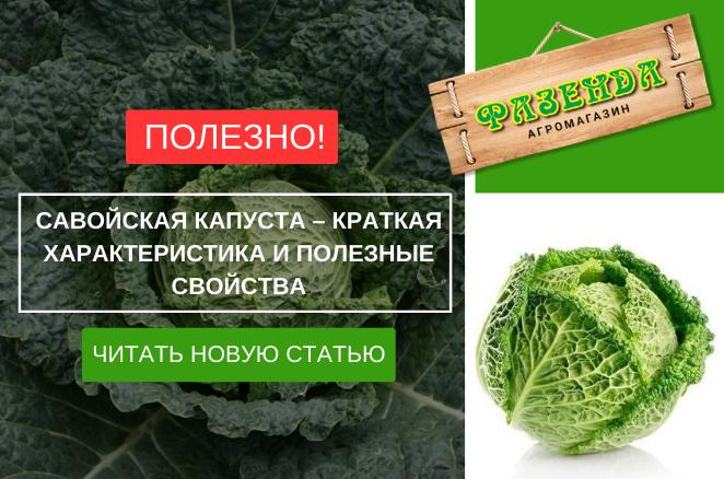 Савойская капуста – краткая характеристика и полезные свойства