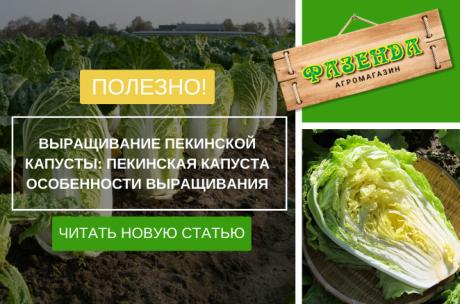 Выращивание пекинской капусты: пекинская капуста особенности выращивания | Фазенда
