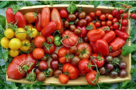 Урожайные сорта ранних томатов