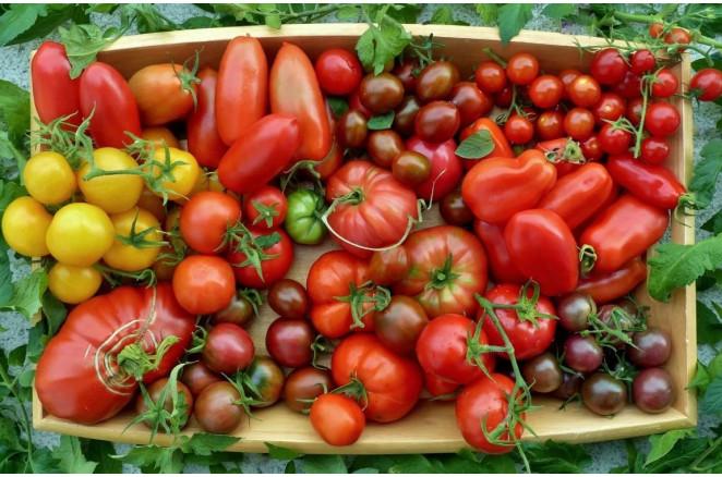 Врожайні сорти ранніх томатів