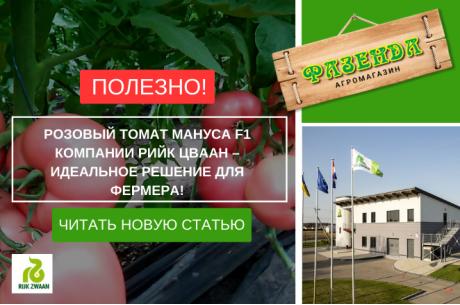 Розовый томат Мануса F1 компании Рийк Цваан – идеальное решение для фермера!