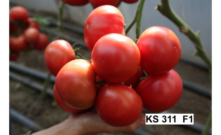 КС 311 F1 KS 311 F1 Томат Kitano seeds (Япония)