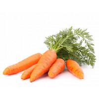 Семена поздней моркови