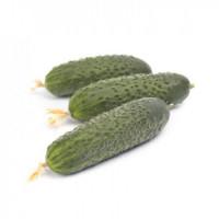 Семена партенокарпический огурцов