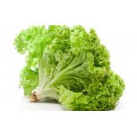 Семена листового салата