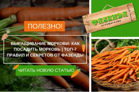Выращивание моркови: как посадить морковь | Фазенда