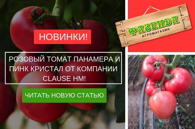 Новинки розовый томат Панамера и Пинк Кристал от компании Clause HM!